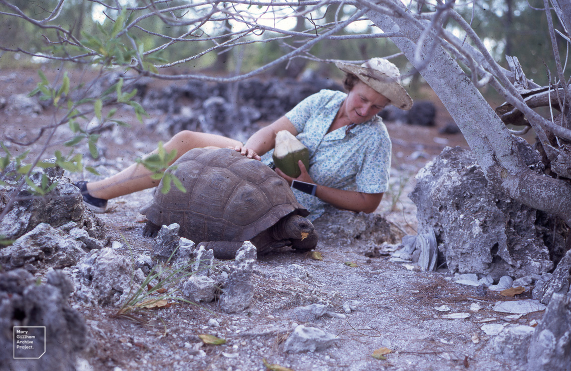Mary Gillham and Aldabran tortoise, Aldabra 1970
