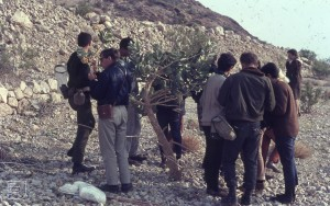 Tel Aviv boys (ex conscriptees) studying Calotropis. Ortolan bunting terrace. Ein Gedi Reserve, 1968