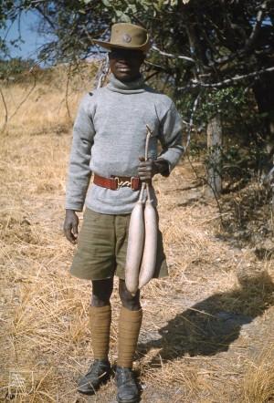 Kigelia pinnata, Sausage tree. Bignoninaceae. Mvungu fruits. Simon = game guard. Kafue, Zambia