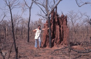 Termite Castle in burned Savanna. Professor Rodney Shotter, Yankari. 1981