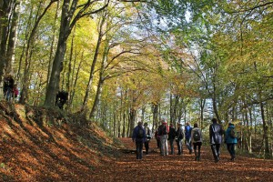 A fungi walk led by Glamorgan Fungus Group in Draethen woods