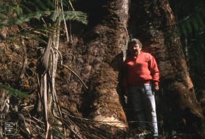 Hope Black at base of huge mountain ash, Davallia. Ottways, Victoria. 1995