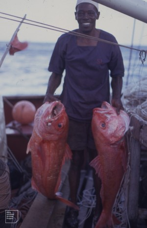 Red Snapper hauled up from 600 feet down off Astove Island, 1970.