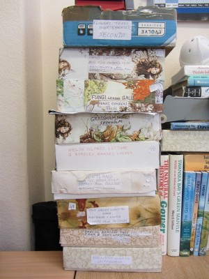 Mary kept her slides in a variety of boxes, generally sorted by location or by subject. She decorated these boxes with paper herself.