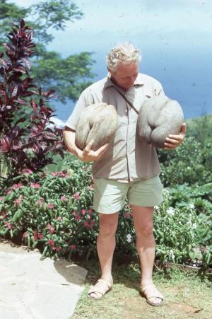 Two coco de mers. Syd Johnson likes them plump. Mahe 1973